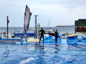 шоу дельфинов в маринлэнд майорка