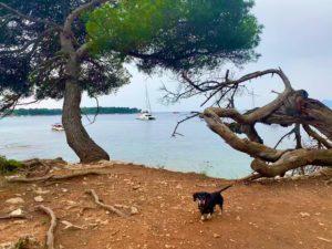 кроличья такса леринские острова катамаран
