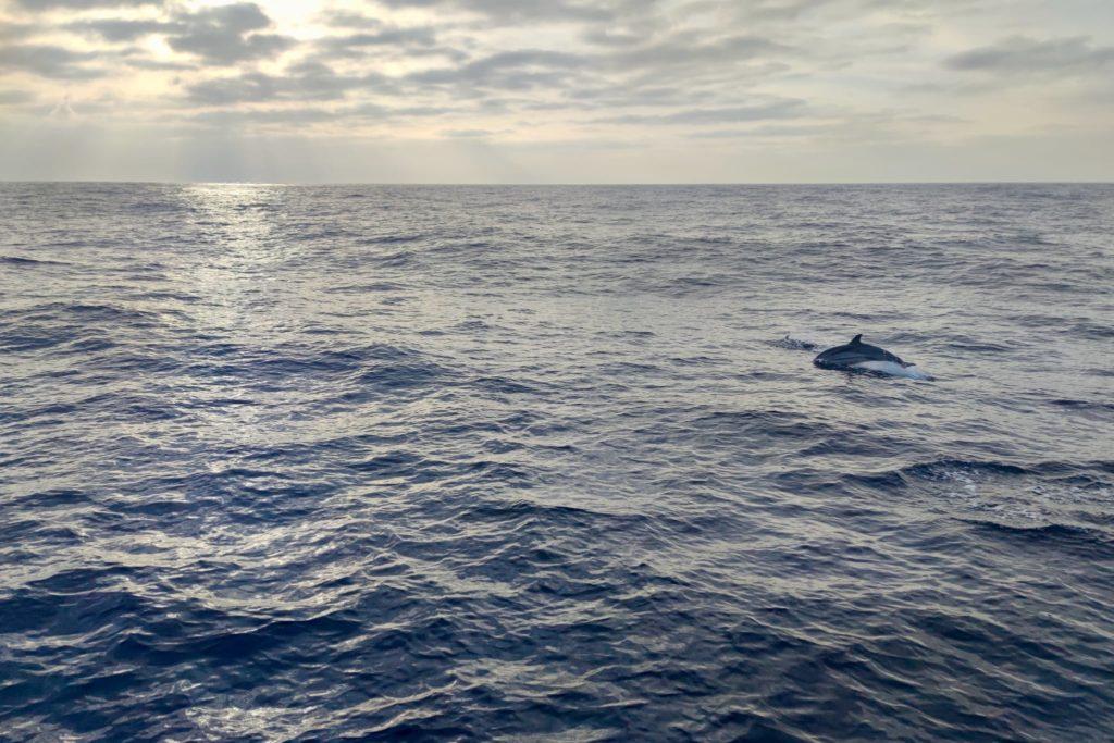 море рассвет дельфин прыжок