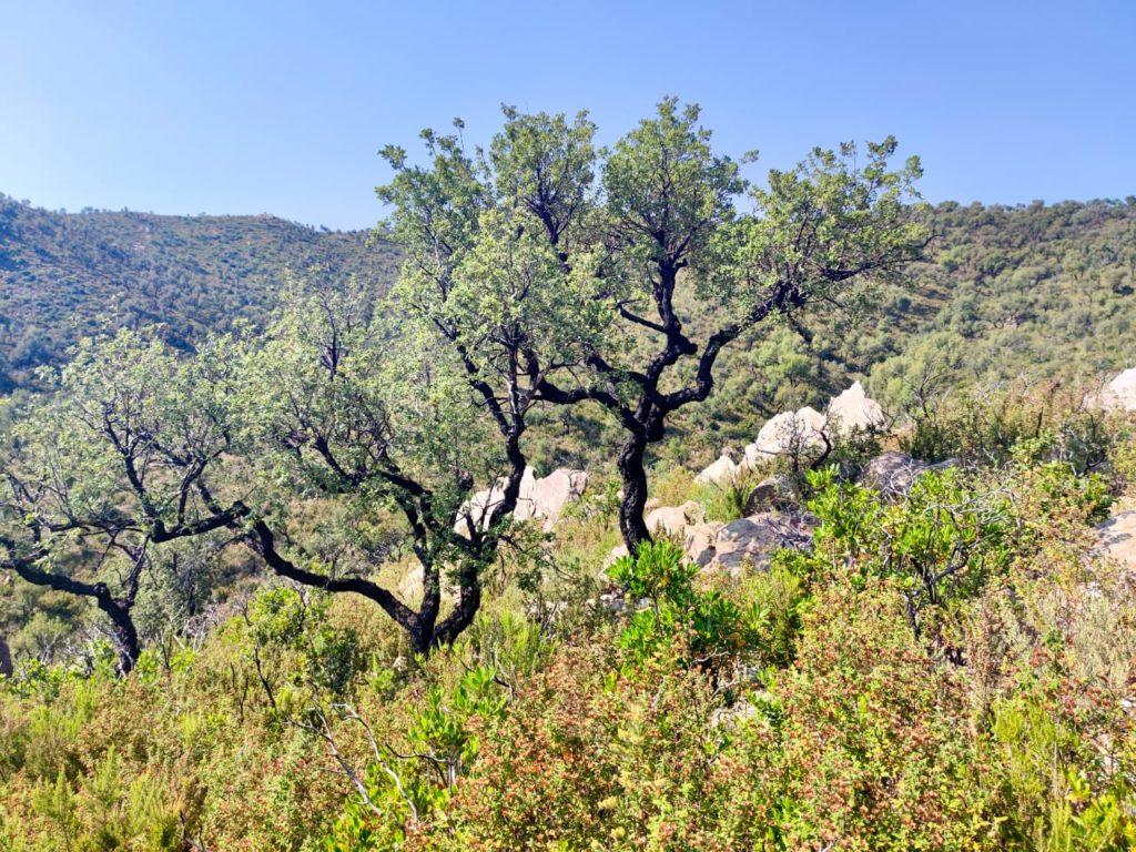Прованс Средиземноморье природа дерево