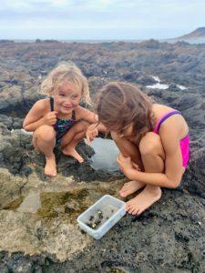 сбор моллюсков лансароте улитки